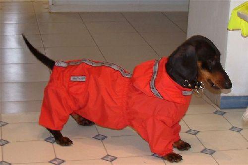 Psi i psići (kinologija, pasmine pasa, obuka pasa, dresura pasa, lovački psi, kućni psi, hranidba pasa, slike pasa, Vaša najdraža pasmina pasa, izložbe pasa, šetanje pasa, kupanje pasa, perilica za pse, hrana za pse) - Page 4 Jazz_u_kap_2